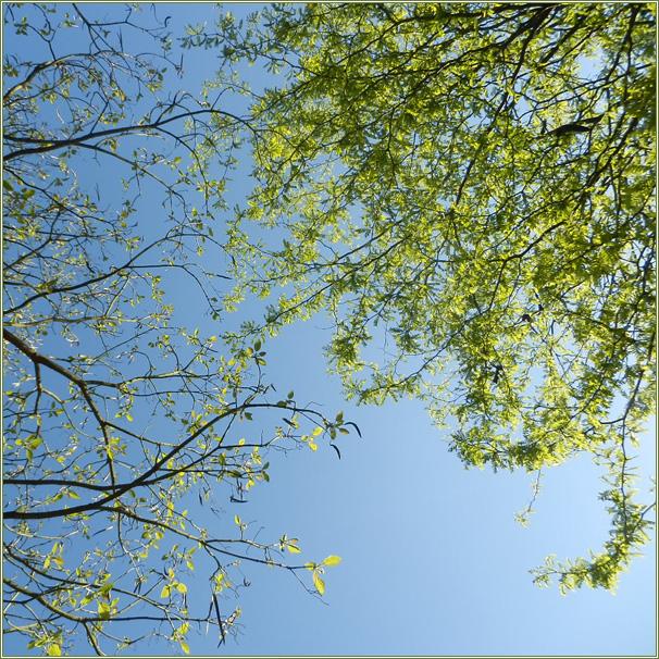 sous-les-arbres