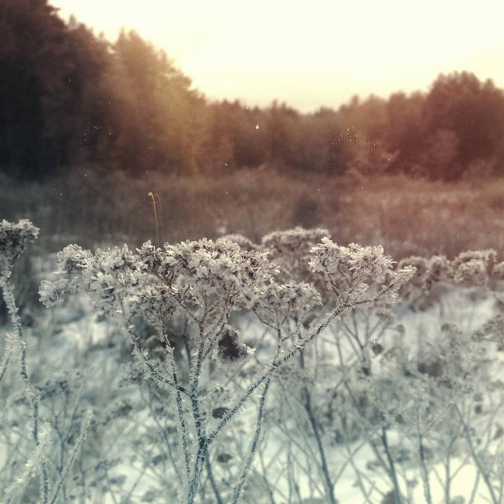 Beautiful Ice covered morning - Megan LaBonte